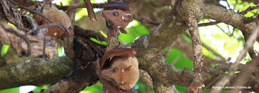 Verkehrsplanung: Fledermäuse sorgen für Unmut bei Transportwirtschaft